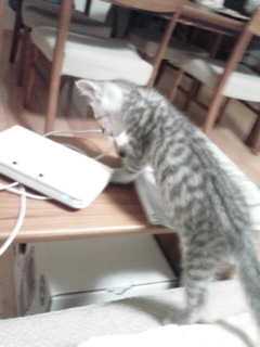 猫のうらみ