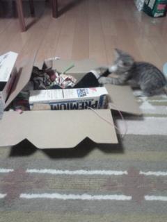 僕のおもちゃ箱