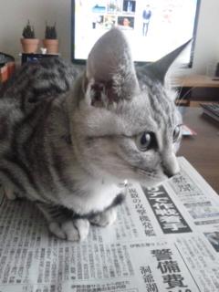 新聞、読みたいですか?