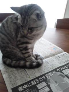読みたいですか?